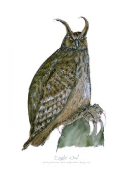 Eagle Owl - signed print